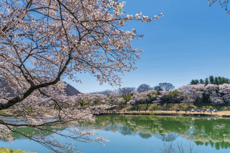 満開に咲き誇る一目千本桜のイメージ 移住に最適!宮城県出身のライターが宮城県の魅力をたっぷりお伝えします|TIME SHARING|タイムシェアリング |スペースマネジメント|あどばる|adval|SHARING